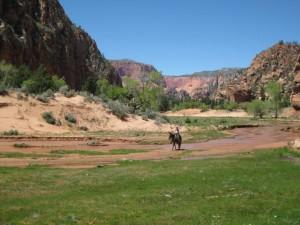 cropped-mule-ride.jpg